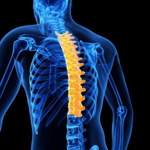 Thoracic Spine PhysiYoga